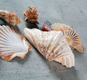 Shells, stones and desert rose Stock Images