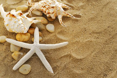 Shells and stones on sand Royalty Free Stock Photo