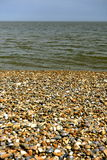 Shells, stones, sand Royalty Free Stock Image