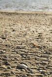Shells am Strand Stockbild