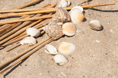Shells and straws in sand Royalty Free Stock Photography