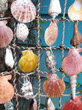 Shells on a String Stock Photography