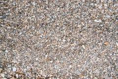Shells stukken stock afbeelding