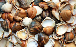 Shells summer vacations background Stock Photo