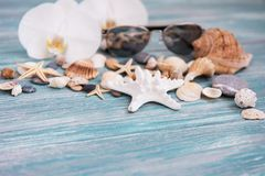 Shells and sunglasses. Shells and  sunglasses on a wooden background Royalty Free Stock Photography