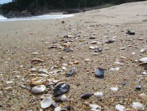 Shells and surf on the beach royalty free stock image