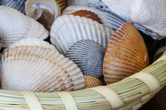 Shells in Sweetgrass Basket Stock Photos