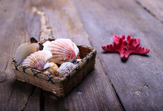 Shells on a table Stock Images
