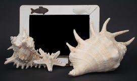 Shells Tafel Stockbild