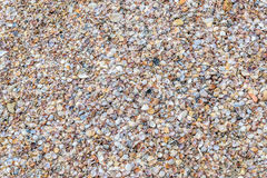 Shells texture finish. Shells texture used in wall floor and garden fill Royalty Free Stock Photos
