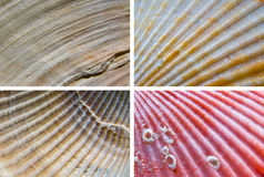 Shells textures. Different close-up of sea shells textures Stock Photo