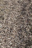 Shells of thousands of snails on the beach, Connecticut. Stock Image