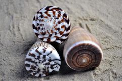 Shells on top of each other. Three sea shells on a sandy beach, on top of each other Stock Photography