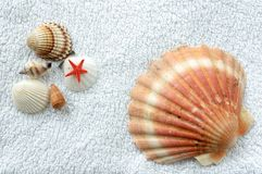 Shells on a towel. Various shells lying on white terry towel Stock Photo