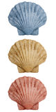 Shells trio Royalty Free Stock Images