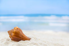 Shells on tropical beach. Summer concept Stock Photos