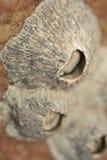 Shells on Umtentweni Beach South Africa Stock Photography