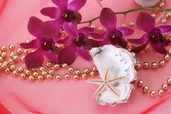 Shells und Orchidee lizenzfreie stockfotografie