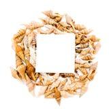 Shells und Papier Lizenzfreies Stockbild