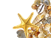 Shells und Starfish Stockfoto