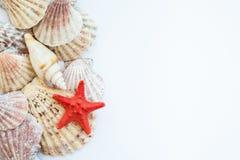 Shells und Starfish Stockfotos