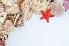 Shells und Starfish Stockbilder