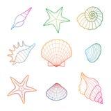 Shells und Starfish Lizenzfreies Stockbild