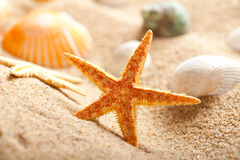 Shells und Starfish auf Sand Stockfotografie