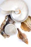 Shells und Steine Lizenzfreie Stockfotografie