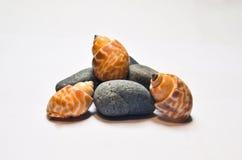 Shells und Steine Lizenzfreies Stockbild