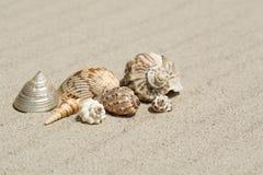 Shells van alle overzees van de wereld op een mooi golvend zand, Royalty-vrije Stock Afbeelding