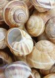 Shells van de escargot royalty-vrije stock foto's