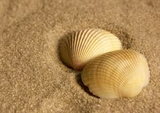 Shells van de kokkel royalty-vrije stock foto