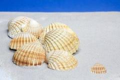 Shells van de kokkel op zand stock afbeeldingen
