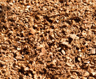 Shells van de kokosnoot Stock Afbeeldingen