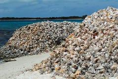 Shells van de kroonslak op strand stock afbeelding