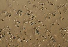 Shells van de kust en zandachtergrond Stock Afbeelding