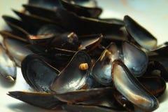 Shells van de mossel stock fotografie
