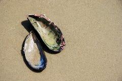 Shells van de mossel op Zand bij Strand Royalty-vrije Stock Afbeelding