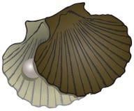 Shells van de parelmossel vector illustratie
