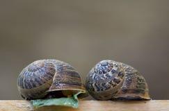 Shells van de slak royalty-vrije stock fotografie