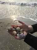 Shells van het overzees Royalty-vrije Stock Foto