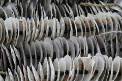Shells van het tweekleppige schelpdier Royalty-vrije Stock Afbeeldingen