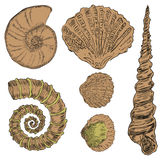 Shells van mariene fauna Stock Afbeeldingen