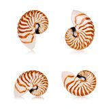 Shells van Nautilus Stock Fotografie