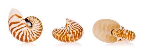 Shells van Nautilus Stock Foto