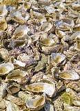 Shells van oesters Stock Afbeeldingen