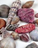 Shells van Tahitian Stock Fotografie