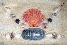 Shells of various shapes and colors on the beach are eye-catching stock image