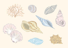 Shells vector set Royalty Free Stock Images